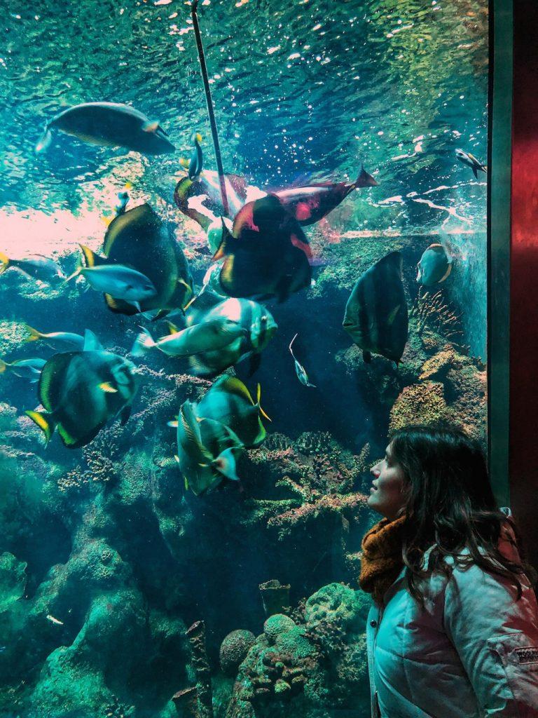 guida di Amsterdam: zoo ARTIS