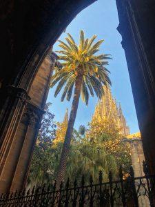 Il chiostro della Cattedrale di Barcellona