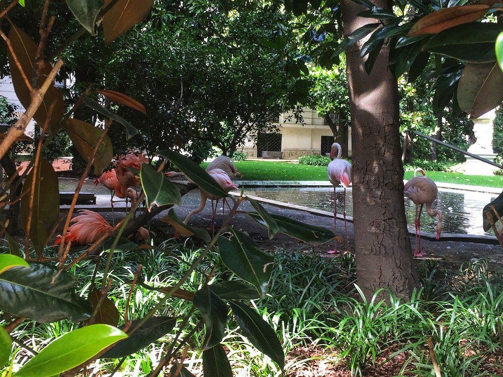 Cosa fare a Milano gratis: i fenicotteri di Villa Invernizzi