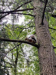 Parco di Monza: scoiattoli